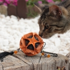 Kusudama and Cat :)