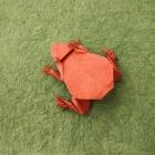 Frog by Leonardo Pulido Martinez