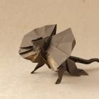 Frill-Necked Lizard by Gen Hagiwara